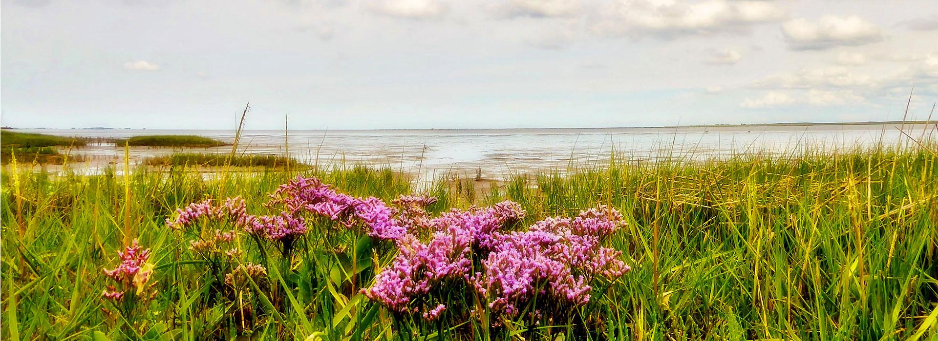 Lauwersoog-bezoeken-Lauwersmeer-vakantie-in-Friesland-Ljeppershiem-vakantiepark-planten