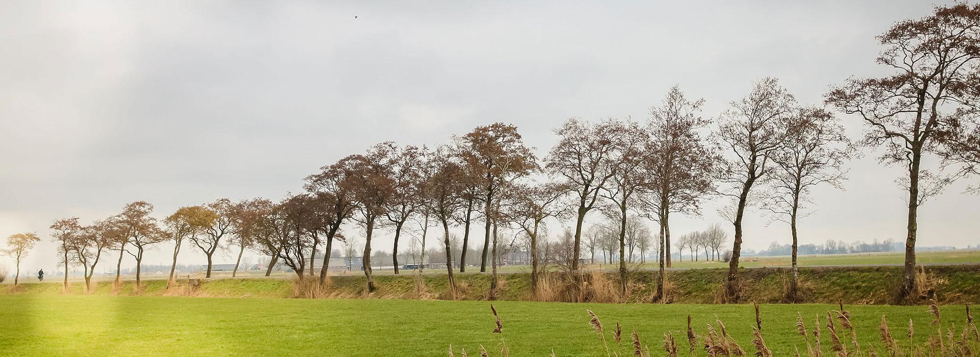 vakantie - friesland - vakantiepark - Ljeppershiem - tiny house-header-04