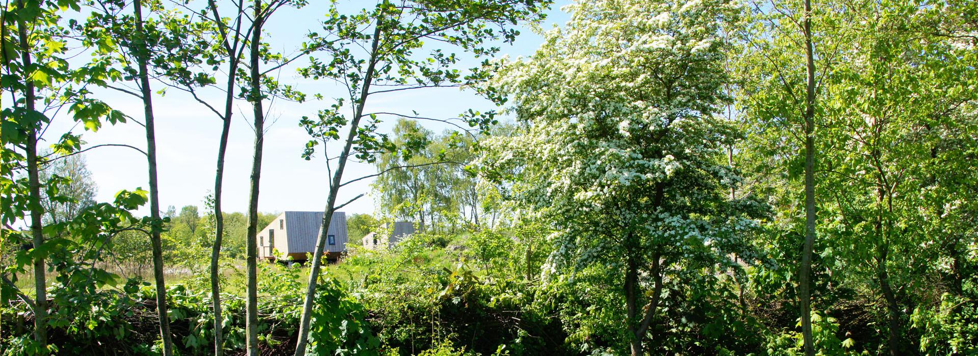 vakantie - friesland - vakantiepark - Ljeppershiem - tiny house-5